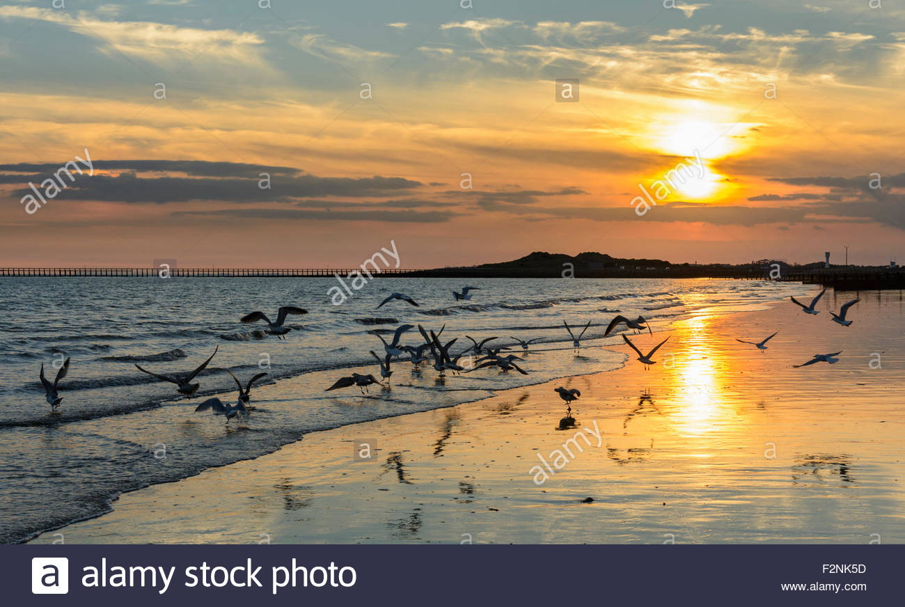 Reflection of the sun on a beach at sunset with seagulls flying low, on the south coast in West Sussex, UK. Tranquillity - Stock Image
