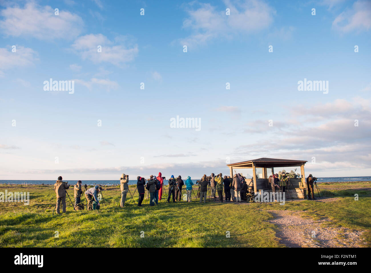 Bird-watchers - Stock Image