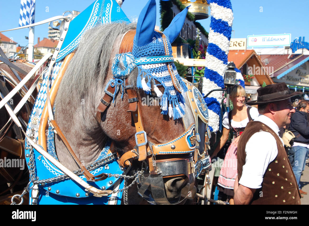 Horse of the Hofbräu brewery pulling beer kegs at the Oktoberfest, Munich, Germany - Stock Image