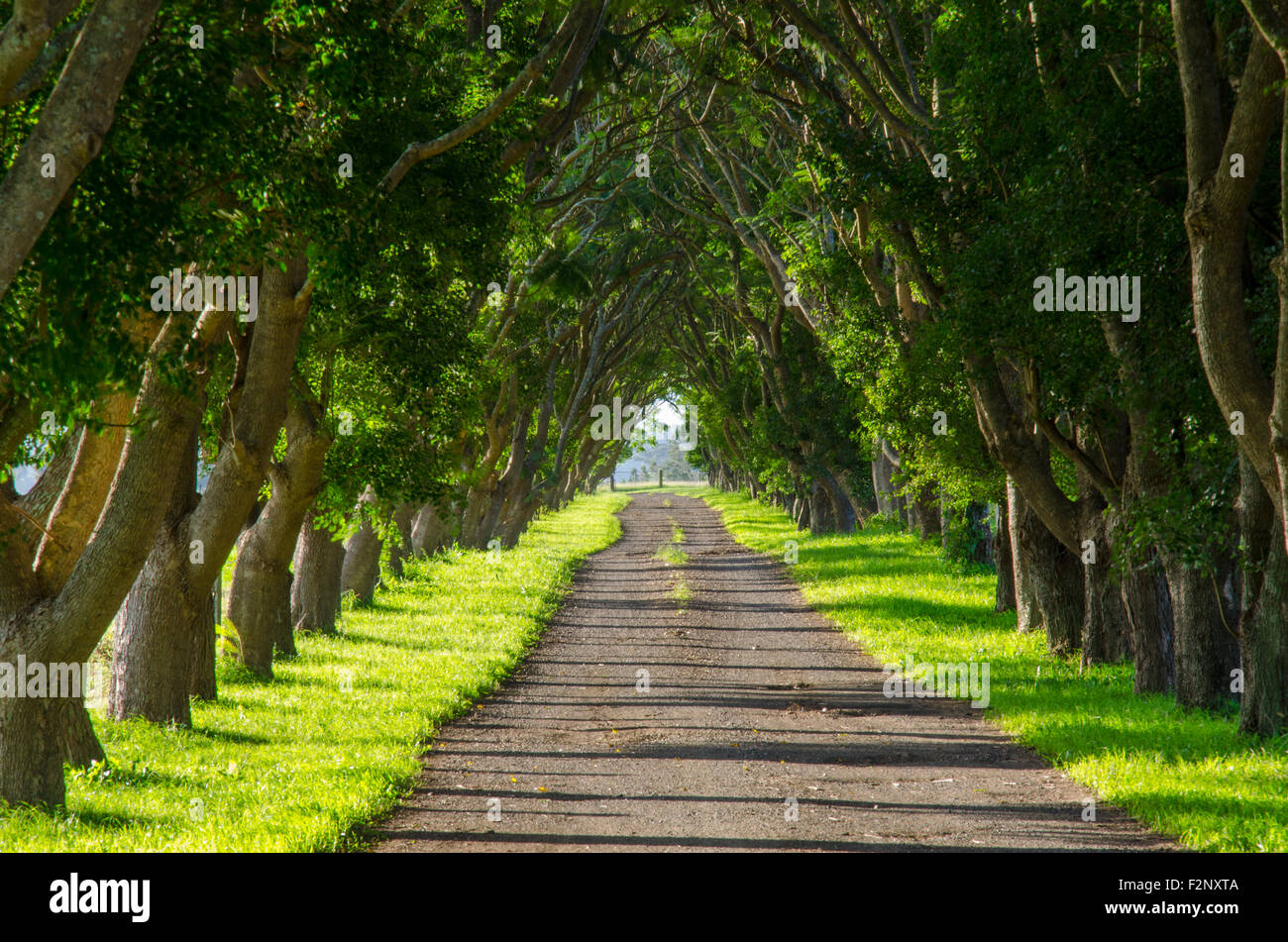 A Long Tree Lined Driveway Entrance To A Farm In New South