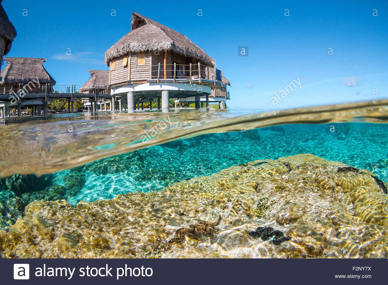 French Polynesia : corals and maxima clams in the lagoon, just below Tikehau Pearl Beach water bungalows Stock Photo