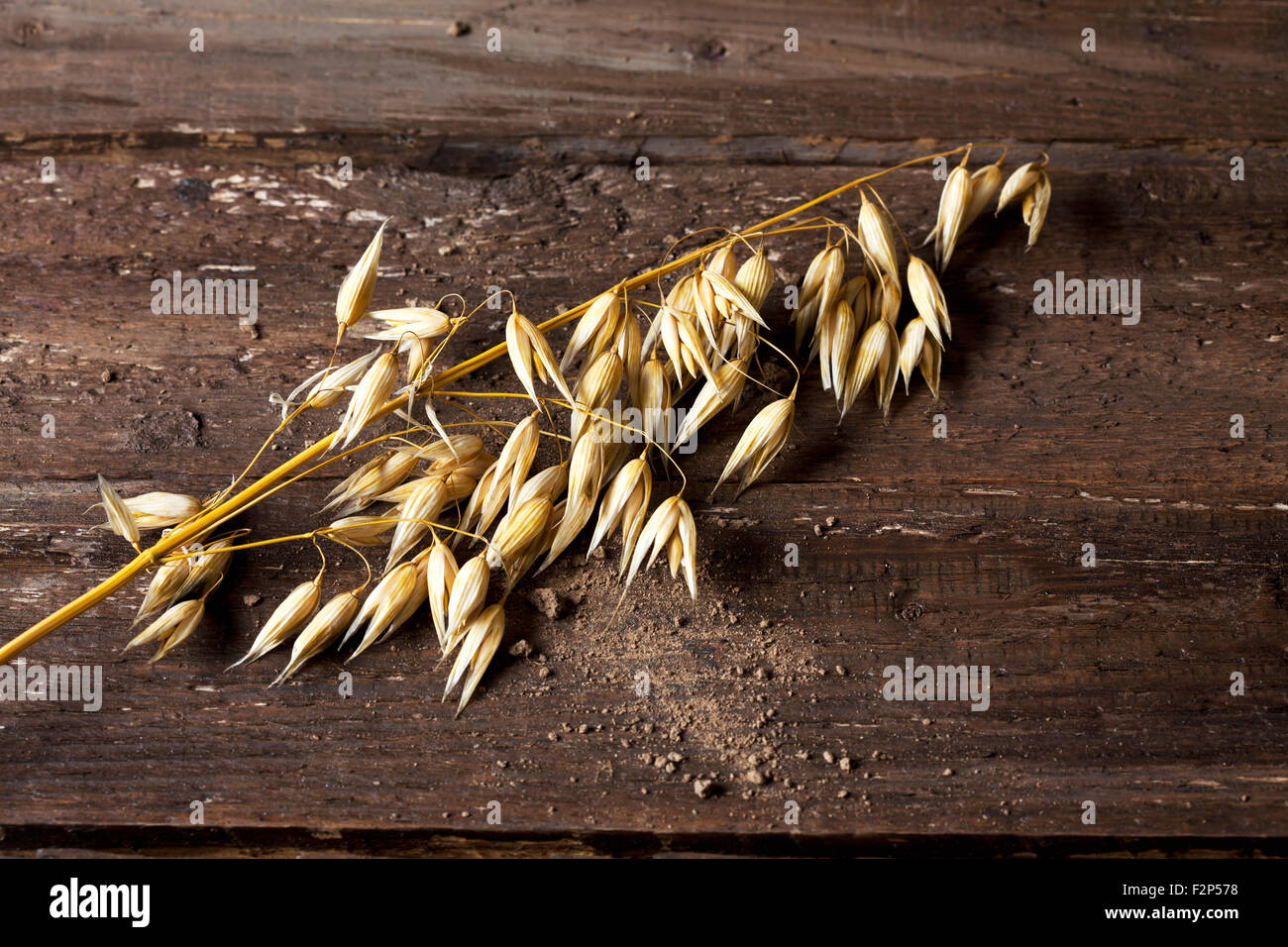 Ripe spike of oat, Avena, on wood - Stock Image
