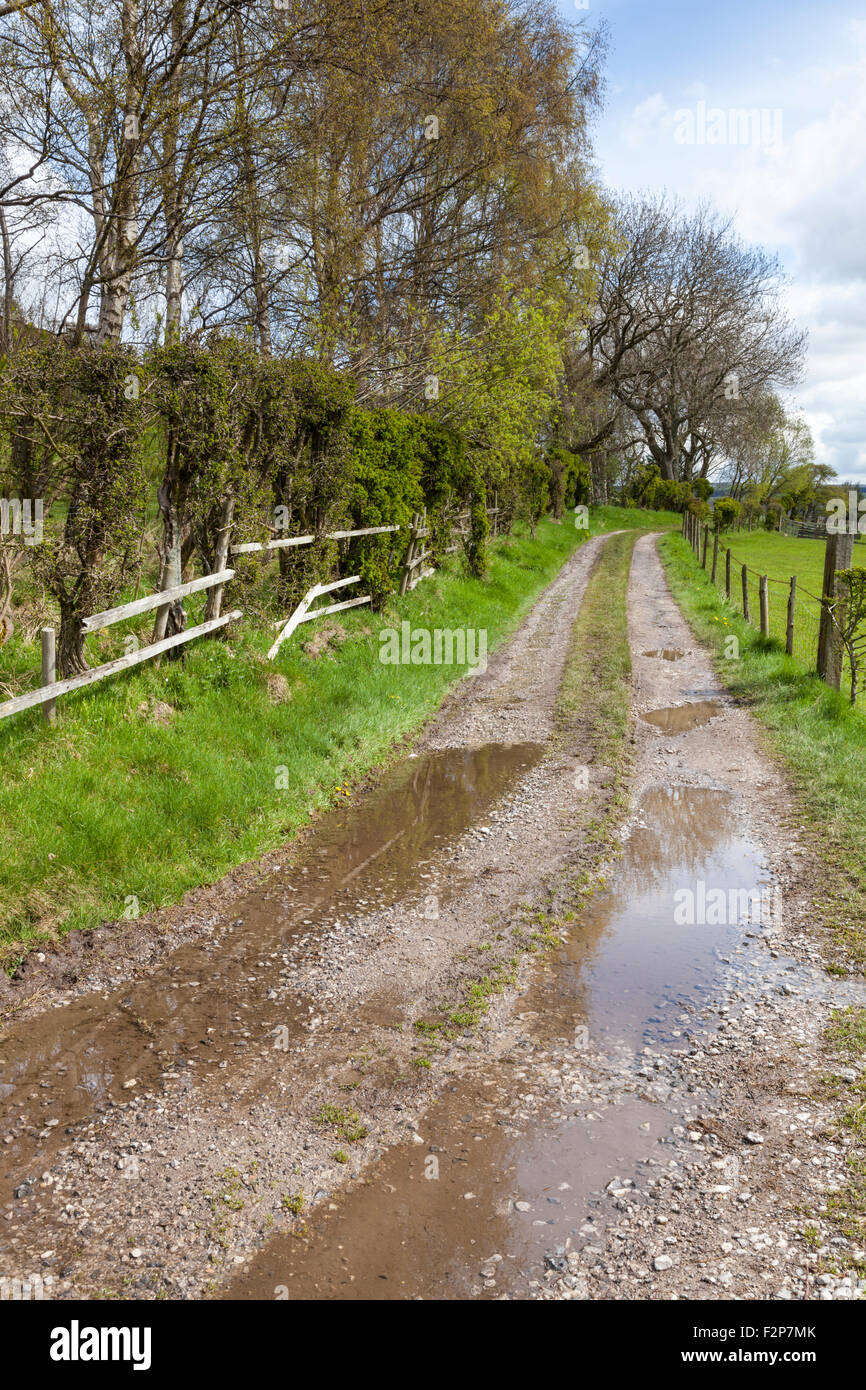 Wet weather. Farm track with puddles after rain, Derbyshire, England, UK Stock Photo
