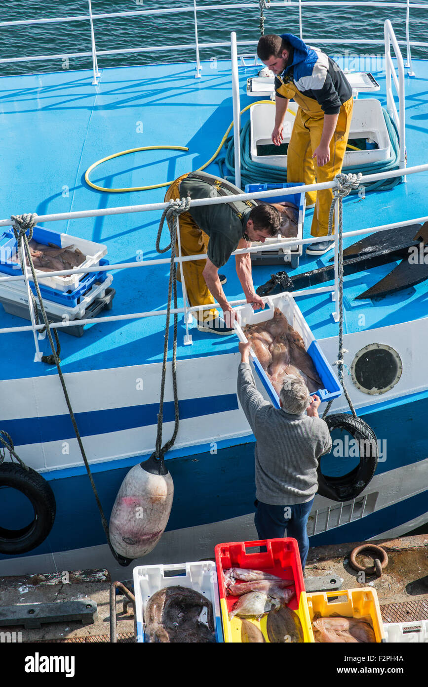 Fishermen on board of trawler fishing boat unloading catch along quay of the fish auction market - Stock Image