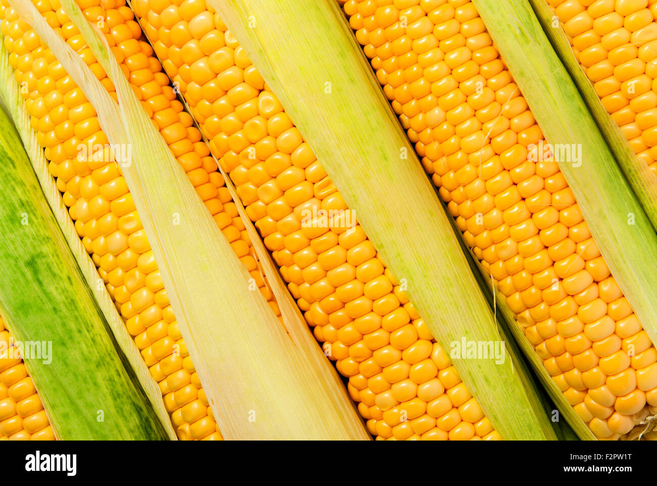 Background of stacked near peeled corn cobs diagonally - Stock Image