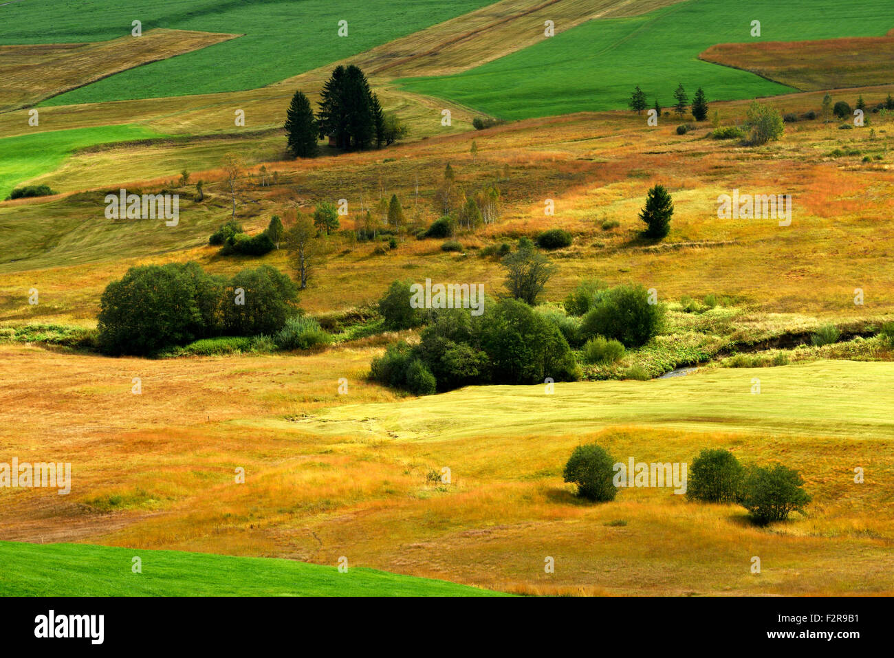 Upland moor Rothenthurm, Canton of Schwyz, Switzerland - Stock Image
