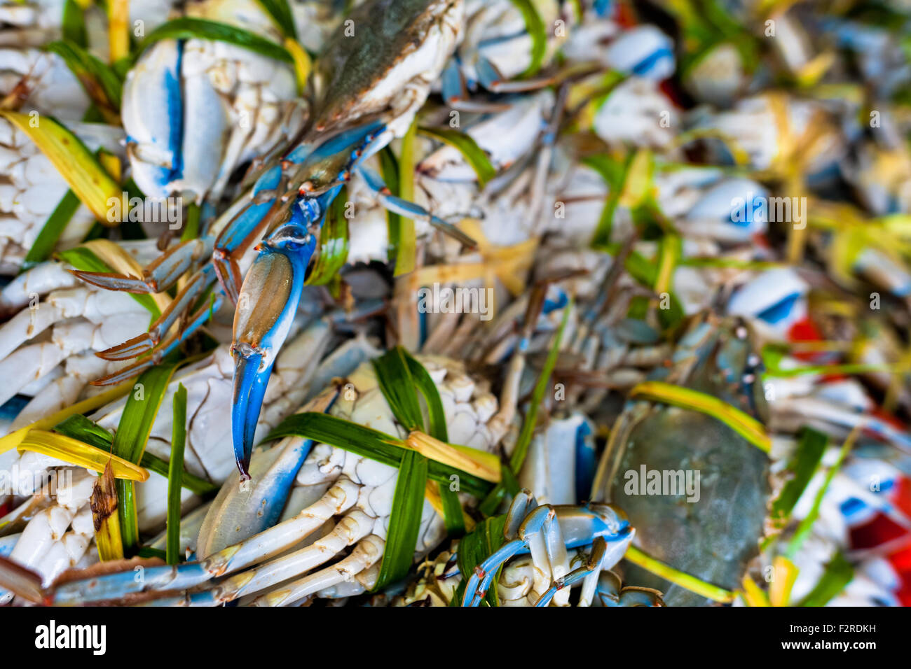 Live blue crabs, tied with palm leaves, are seen for sale at the seafood and fish market in Veracruz, Mexico. Stock Photo