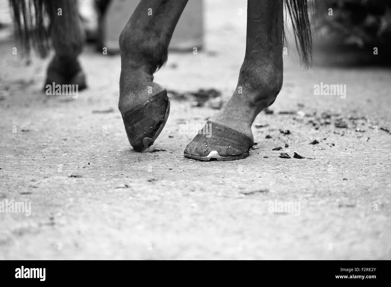 Horse hoof close-up image - Stock Image