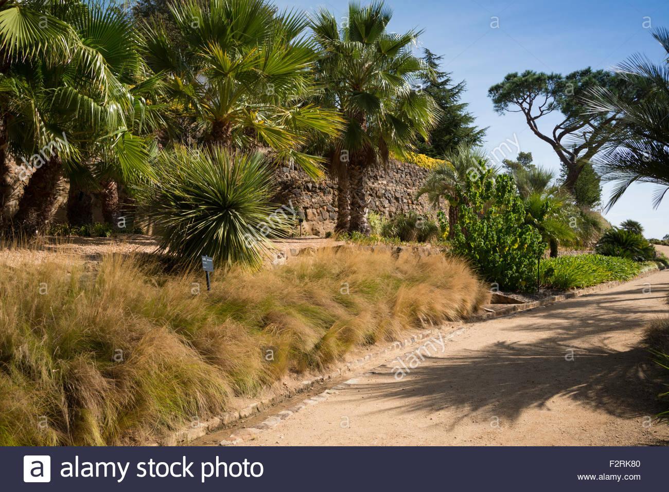 Stipa Tennifolia in the Palm Garden, Gardens of Cap Roig, Botanic ...