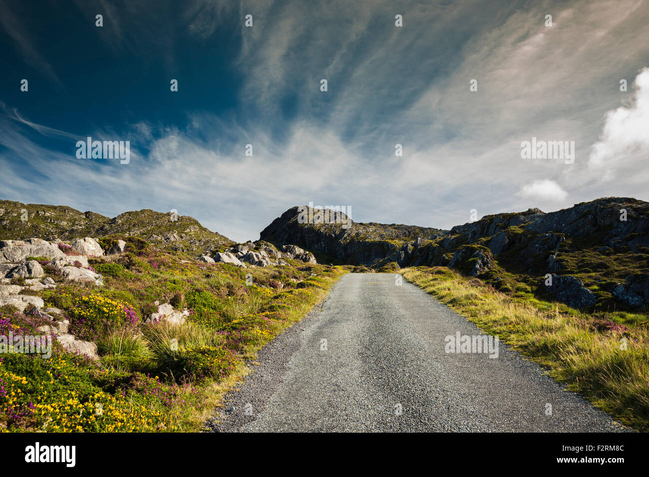 Track on the Beara Way walking path, with flowering western gorse and heather, and spectacular clouds, Allihies, - Stock Image