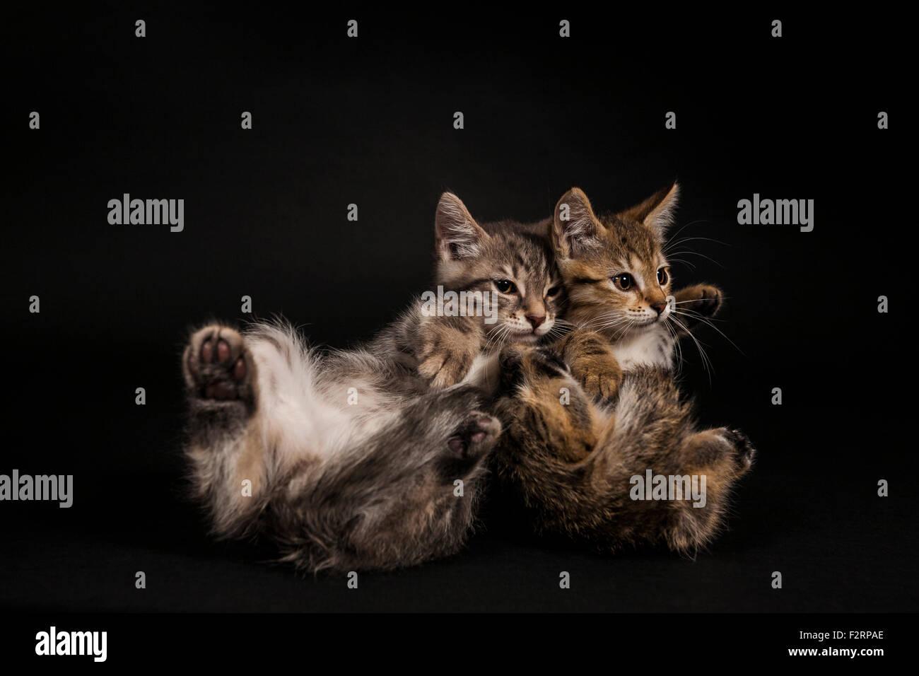 cat falling stock photos cat falling stock images alamy