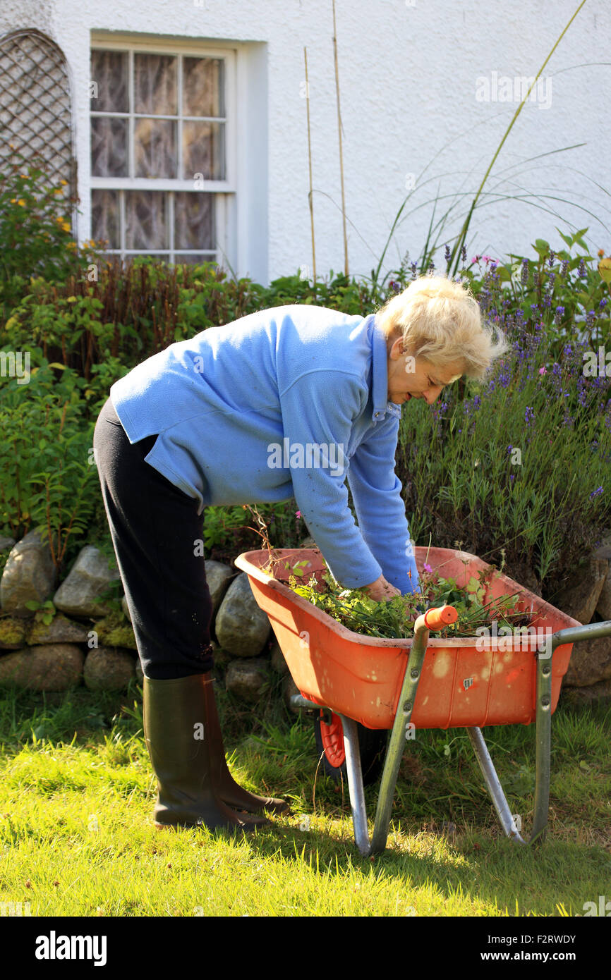 Sprightly elderly lady cutting back flowers at the end of summer and at the same time keeping active whilst gardening - Stock Image