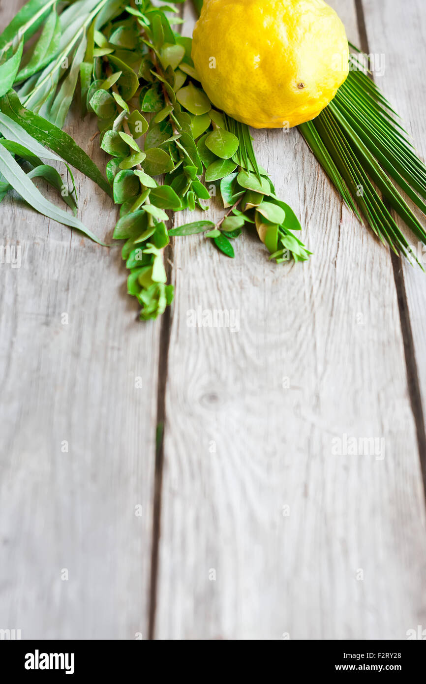 Symbols of jewish fall festival of Sukkot, lulav - etrog, palm branch, myrtle and willow - on old wooden background. - Stock Image