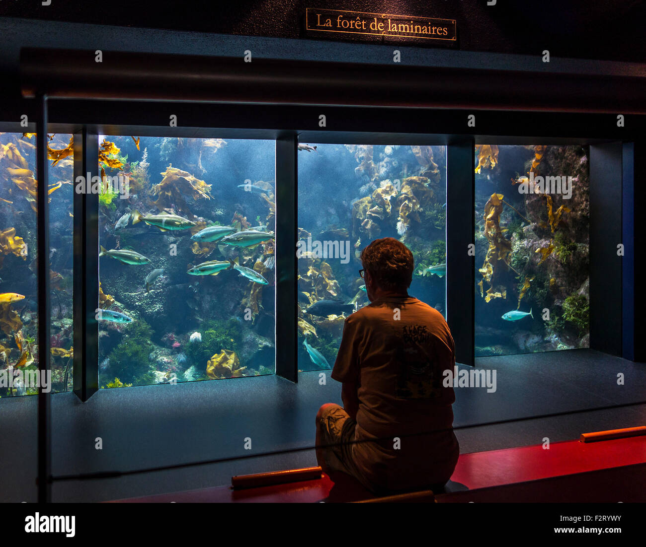 Visitor looking at fishes in huge aquarium at Oceanopolis - ocean discovery park - at Brest, Brittany, France - Stock Image