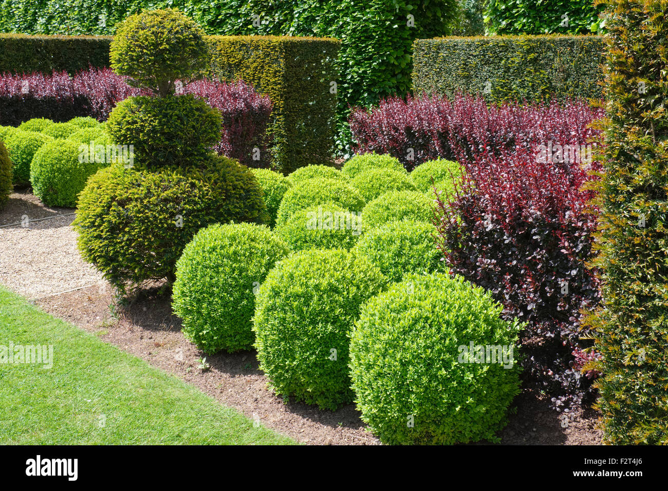Clipped Buxus spheres bordered with Berberis and Yew Hedging - Stock Image