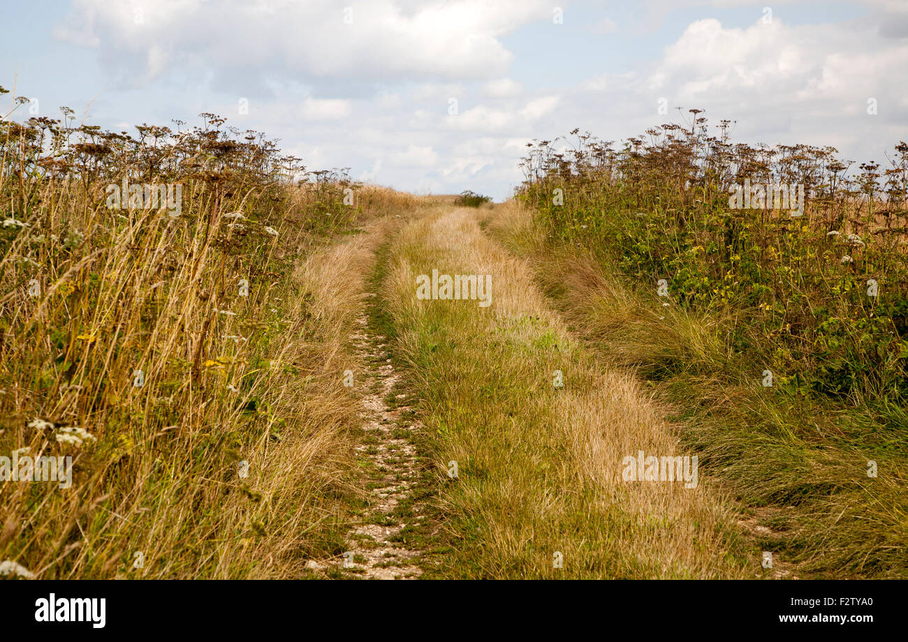 Uphill section of the ancient Ridgeway pathway crossing chalk downland near Liddington Castle, Wiltshire, England, - Stock Image