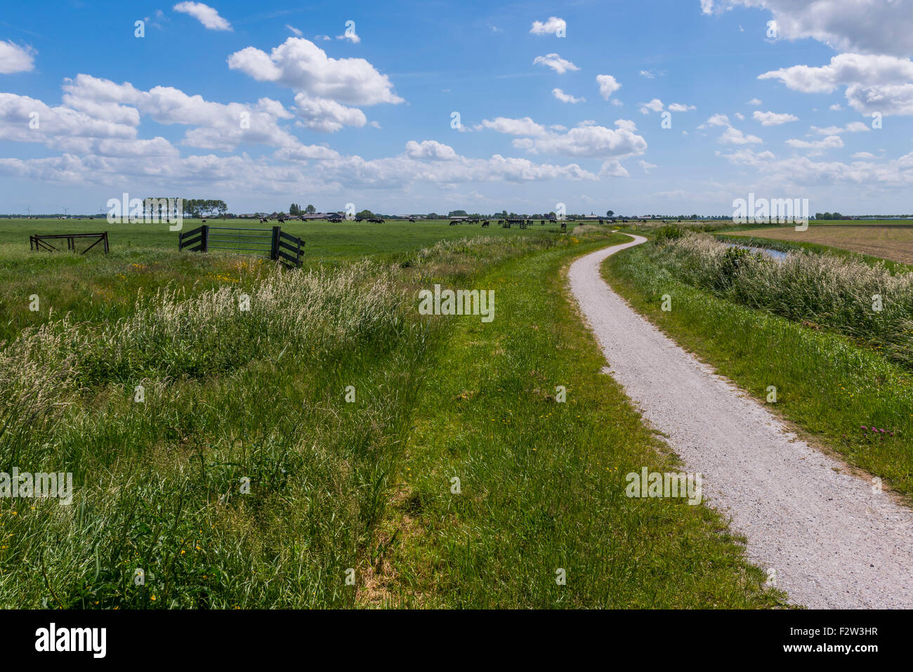 Cycling Path at Aarstwoud in Noord-Holland with water, ditch, meadows and cows. - Stock Image
