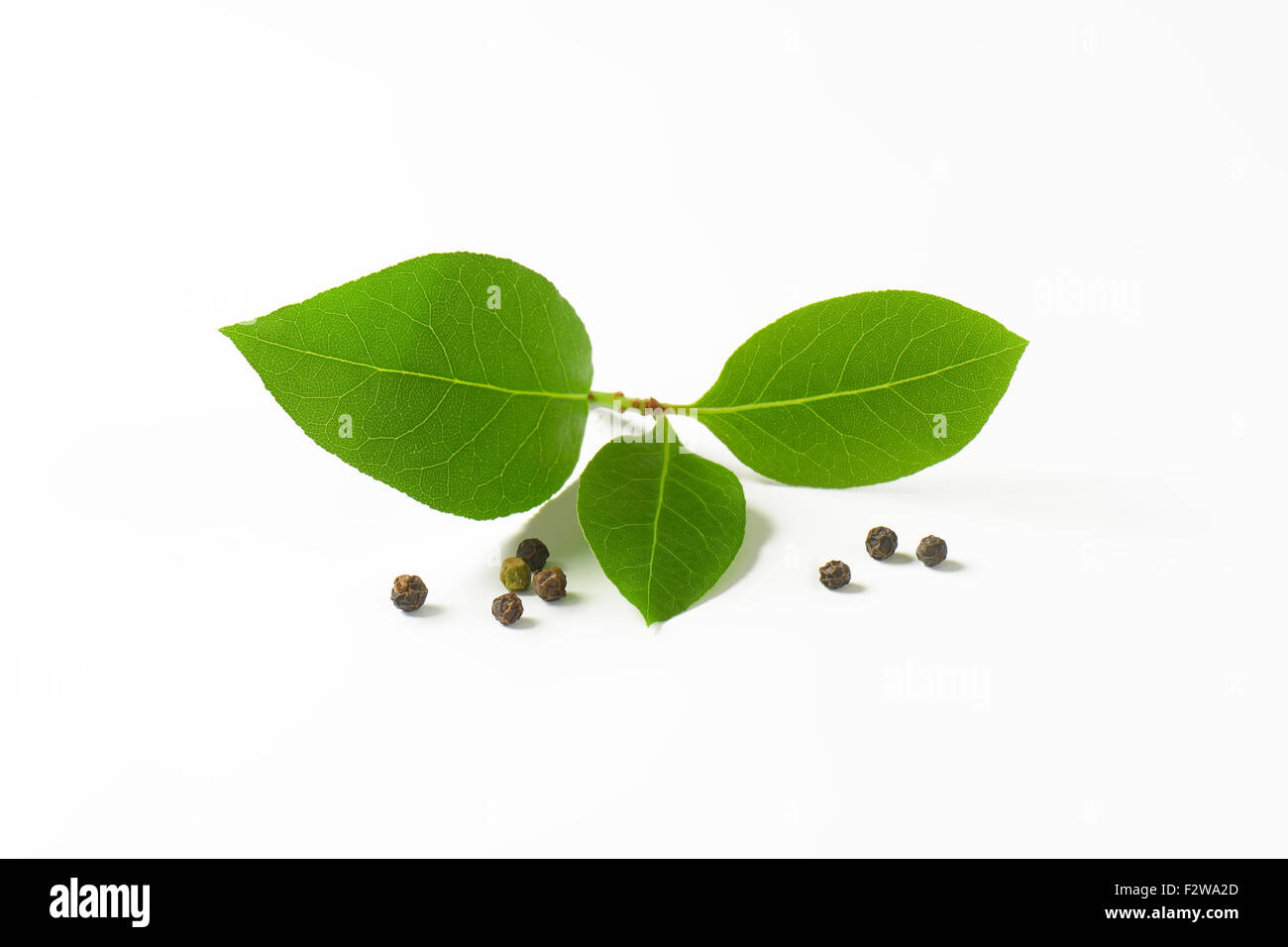 twig o fresh bay leaves and peppercorns on white background - Stock Image