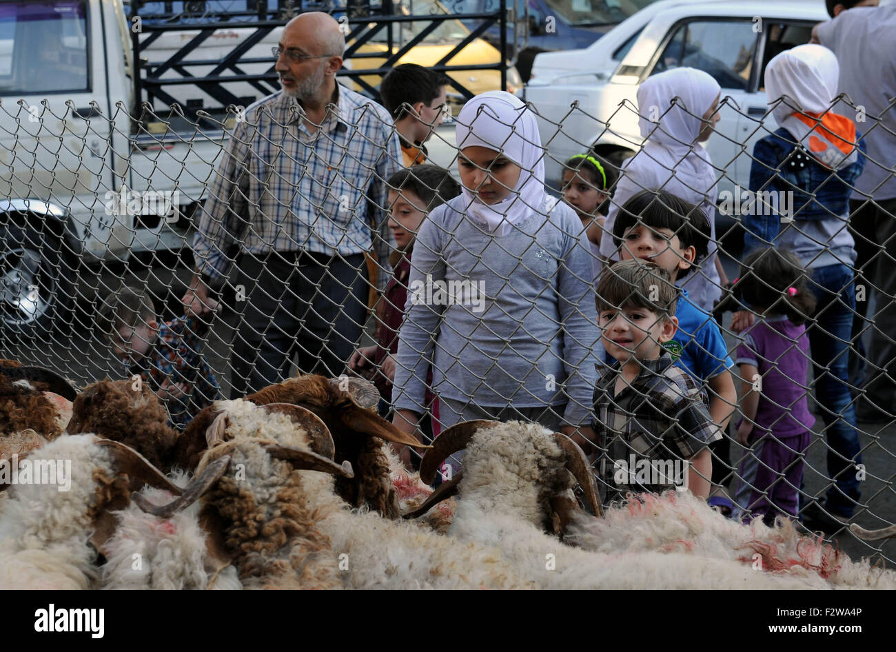 (150924) -- DAMASCUS, Sept. 24, 2015 (Xinhua) -- Children look at sheep for sale in Damascus, Syria, on Sept. 24, - Stock Image