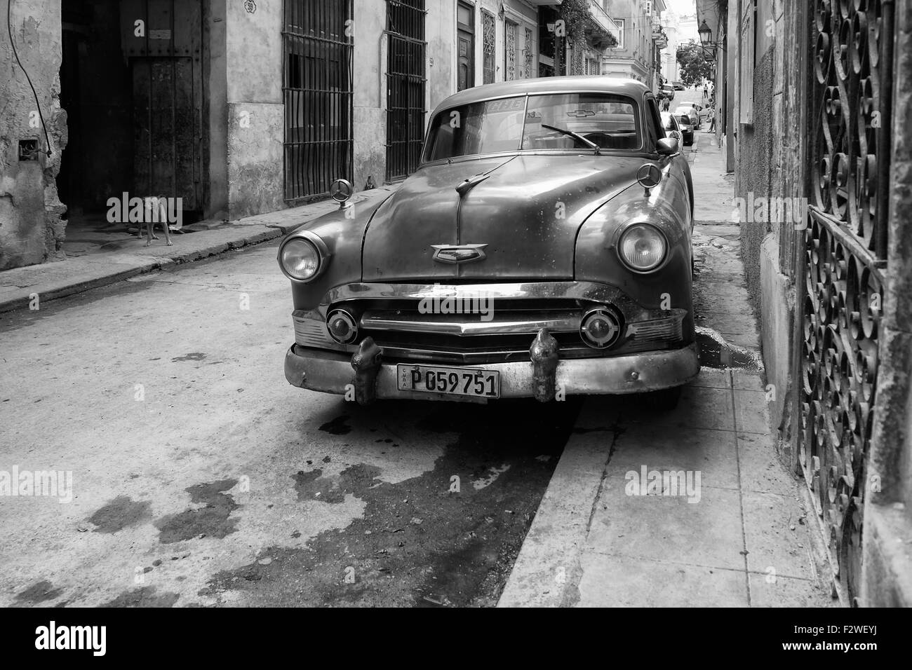 A parked Cuban car and dog stood in the background, urban Havana. - Stock Image