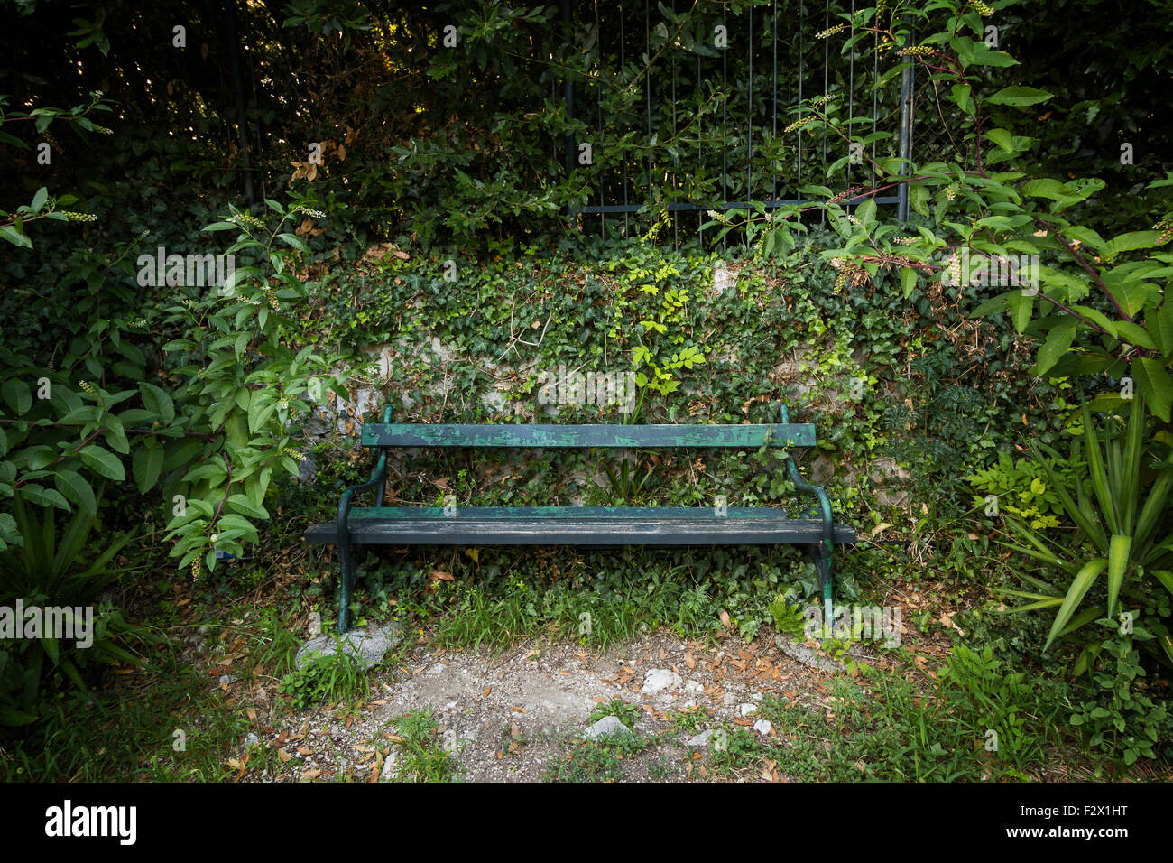 Unoccupied old green bench surrounded by plants and foliage. Concept photo of solitude and anxiety. - Stock Image