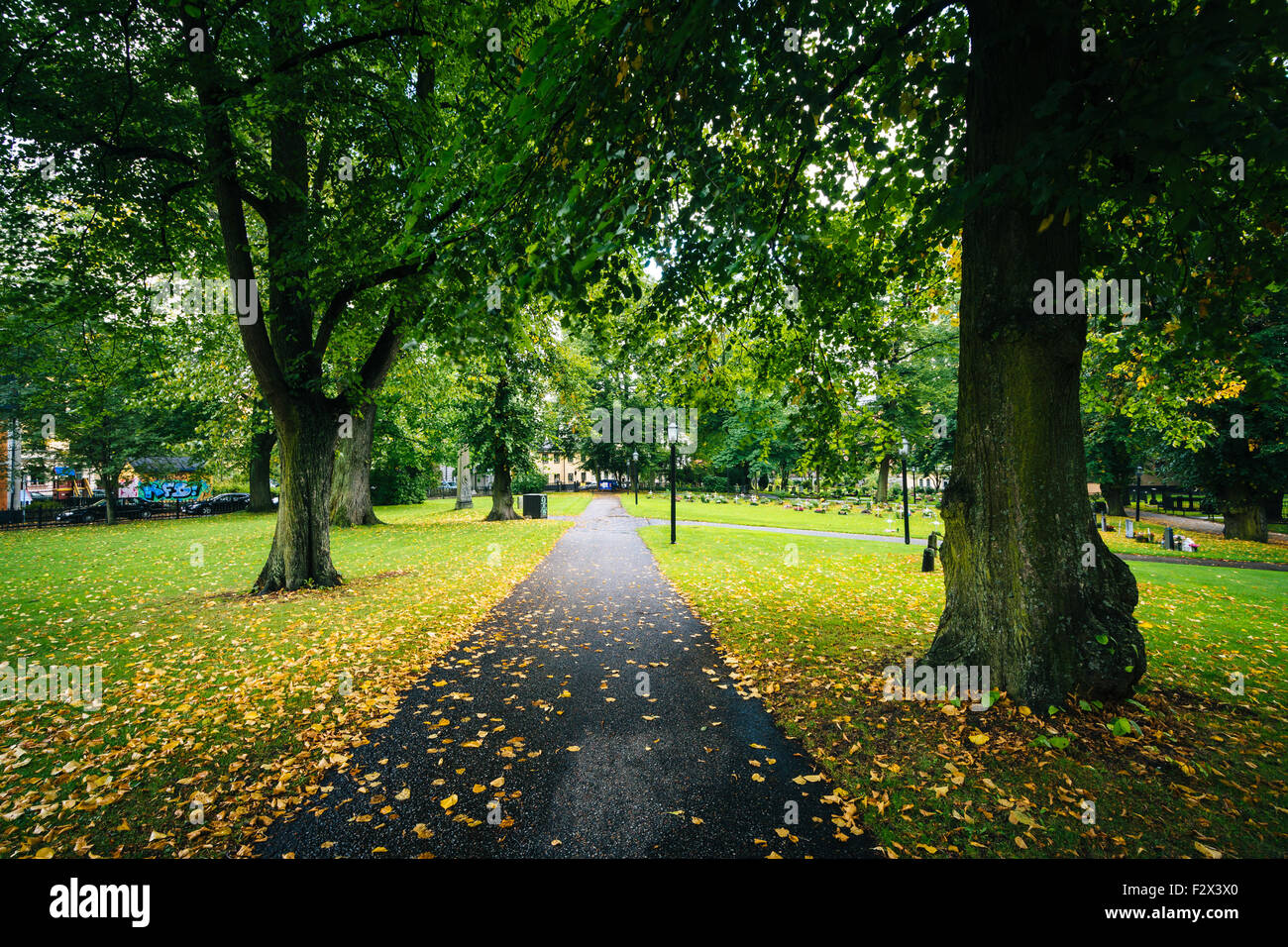 Trees along path outside Katarina kyrka, in Södermalm, Stockholm, Sweden. - Stock Image