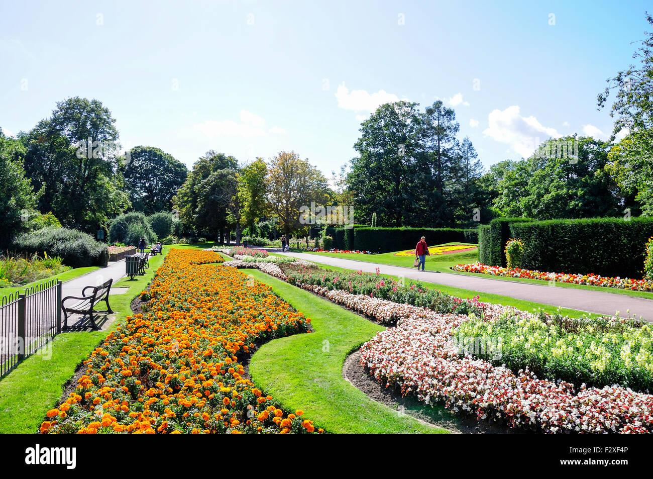 Flower beds, Central Park, Dartford, Kent, England, United Kingdom - Stock Image