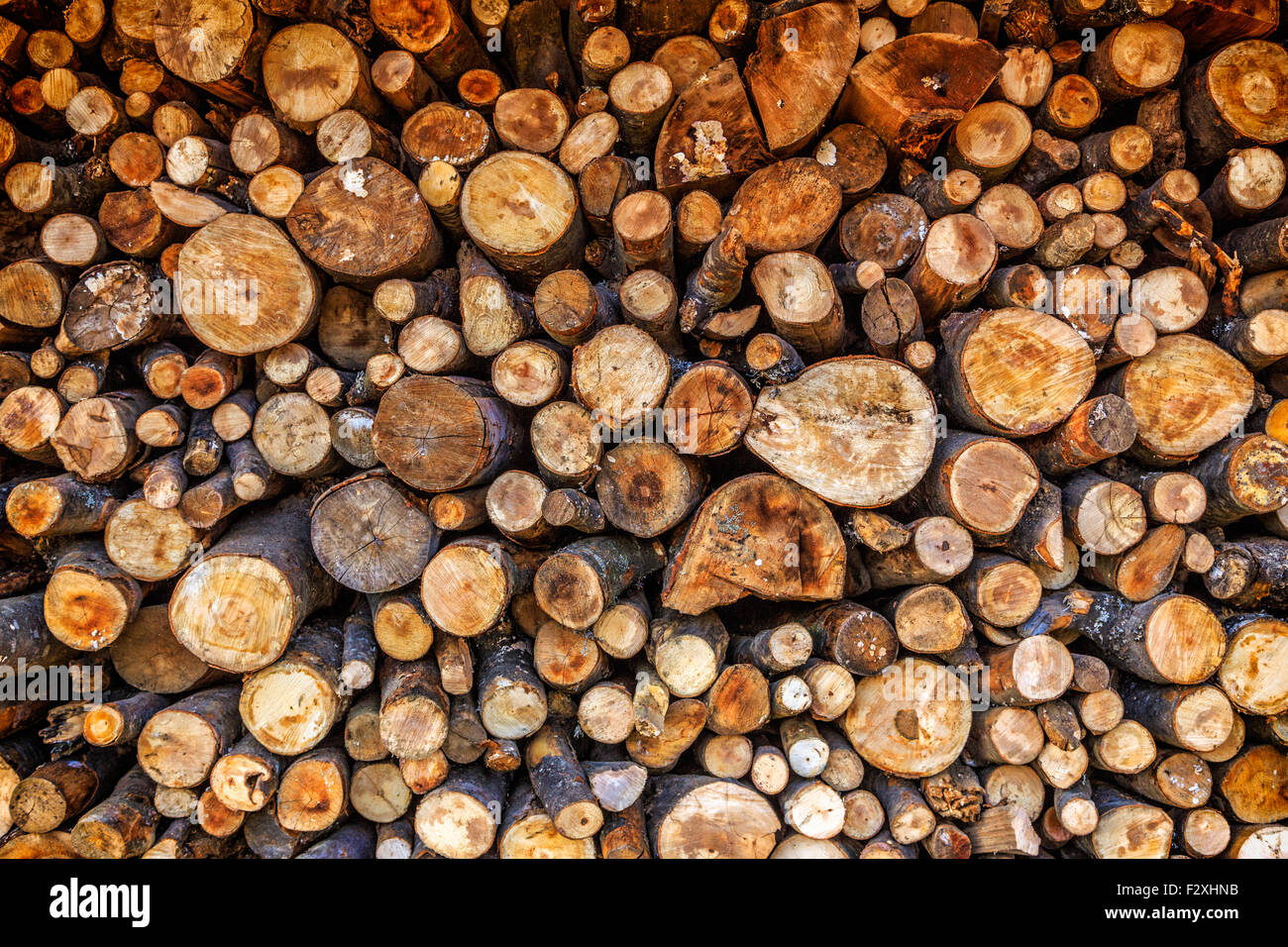 Dry chopped firewood logs ready for winter Stock Photo
