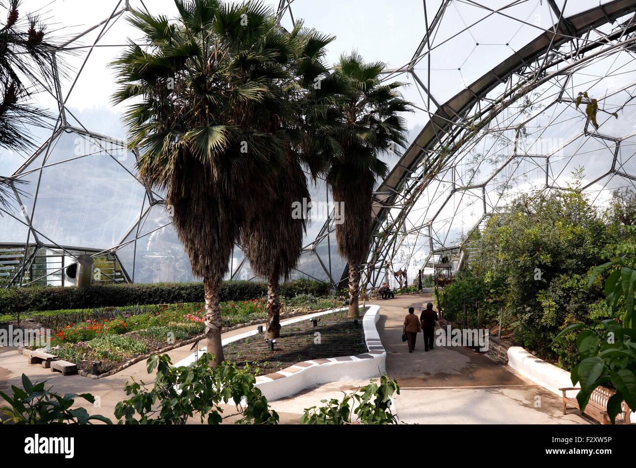 THE MEDITERRANEAN BIOME AT THE EDEN PROJECT. BODELVA CORNWALL UK. - Stock Image