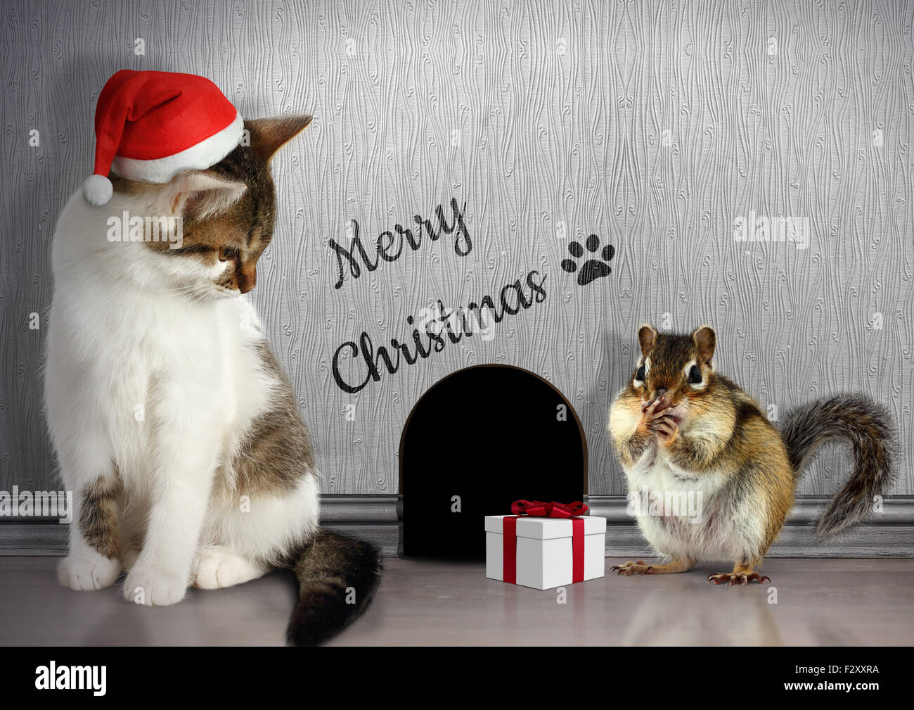 Weihnachten Funny.Christmas Congratulate Concept Funny Cat Dressed Santa Hat And Gift