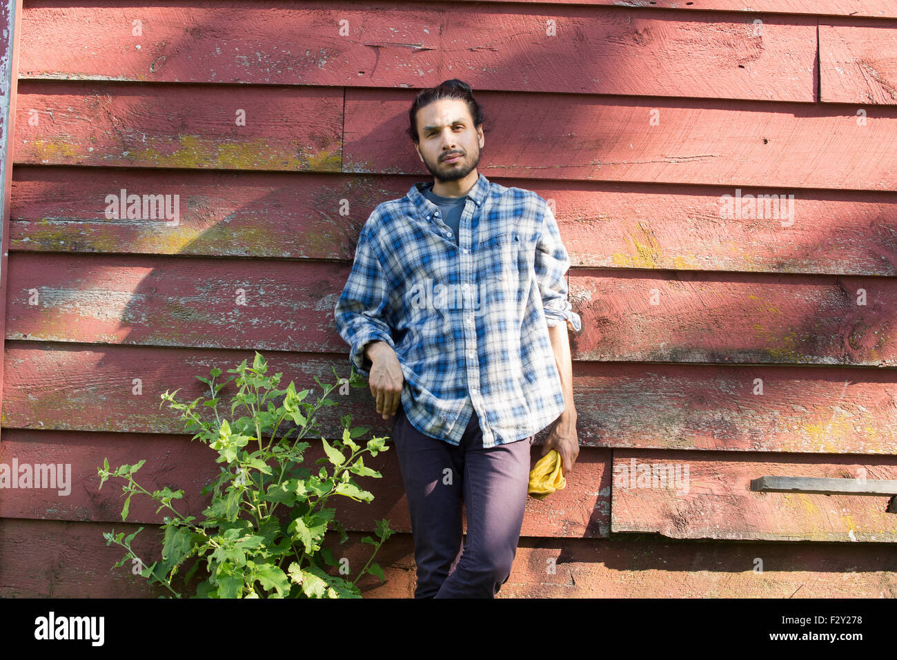 Bearded man wearing a checkered shirt leaning against a wooden wall in the shade. - Stock Image