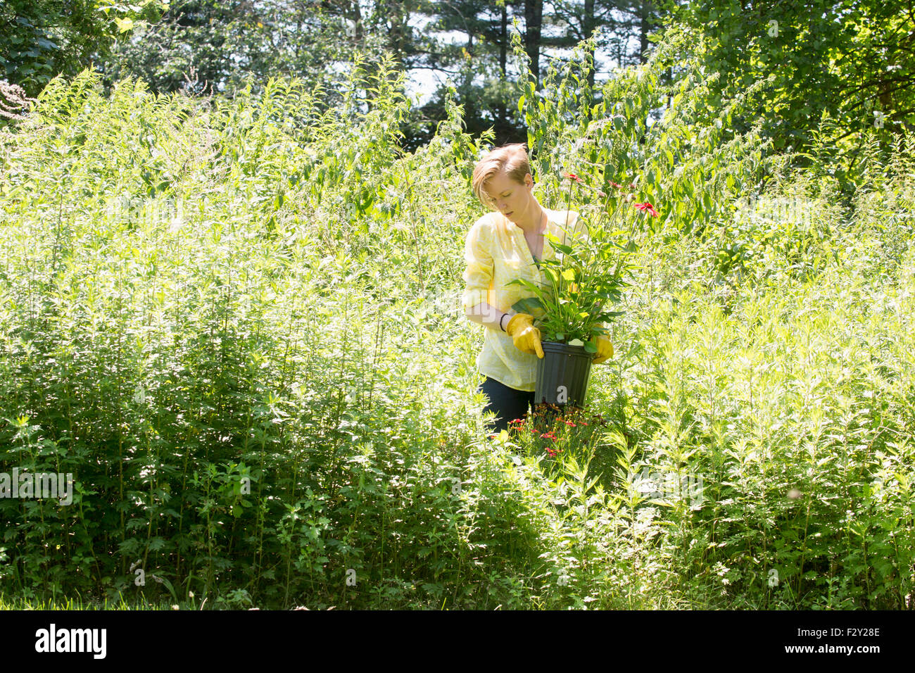 A woman among dense plantings of flowers and tall green and flowering plants at a commercial nursery. - Stock Image