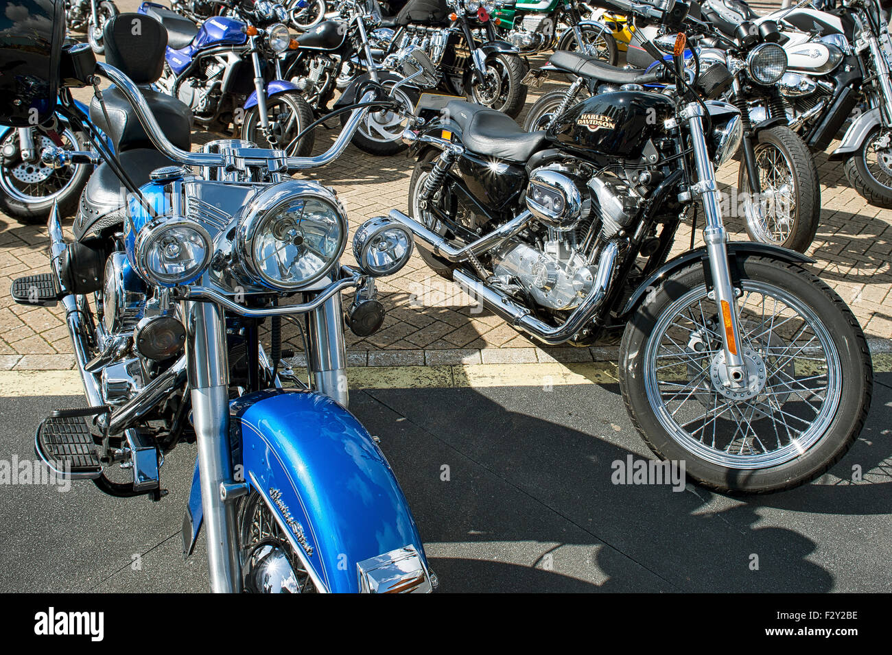 a collection of harley davidson motorbikes parked up. - Stock Image