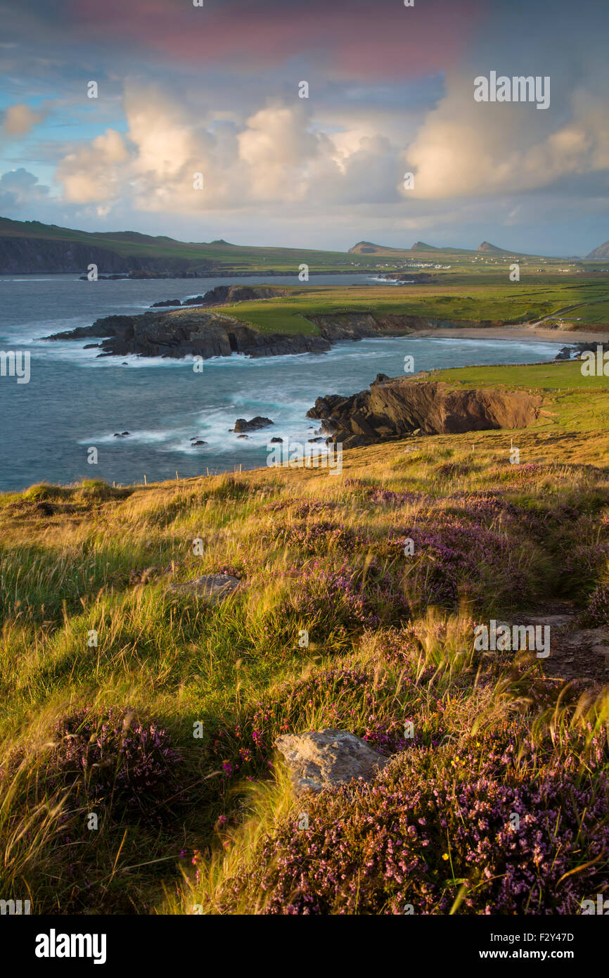 Evening sunlight over Ballyferriter Bay, Sybil Point and the peaks of the Three Sisters, Dingle Peninsula, County - Stock Image