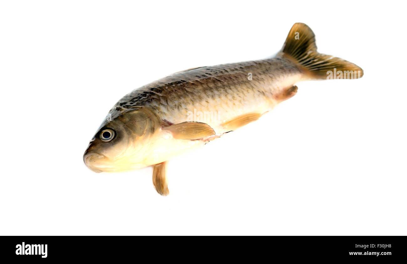 Freshly fish Crucian carp (Carassius auratus gibelio) isolated on white Stock Photo