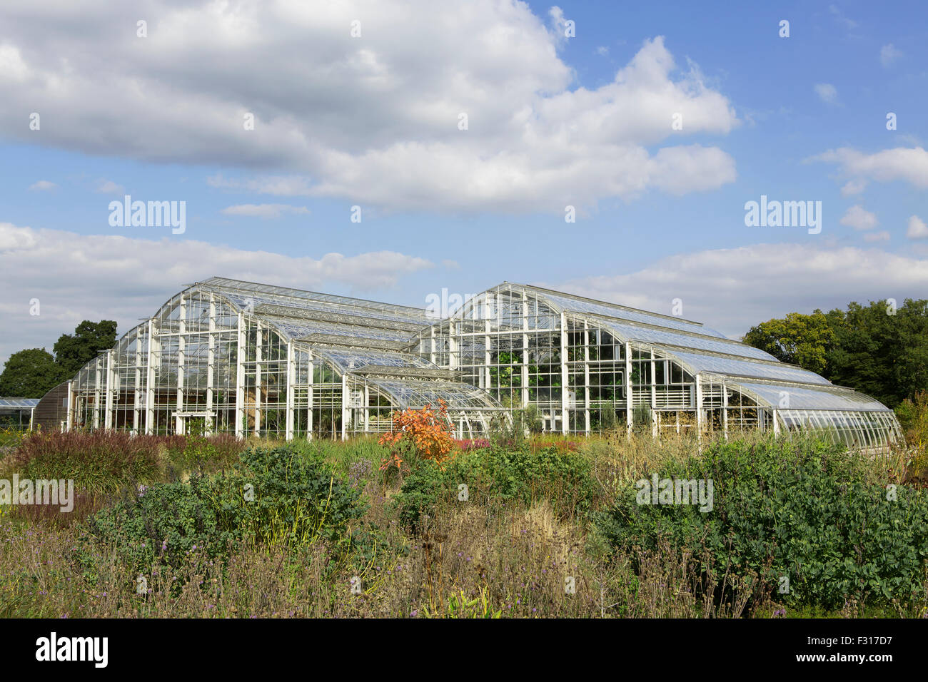 Large Commercial size glass houses. Shot taken across blooming borders - Stock Image
