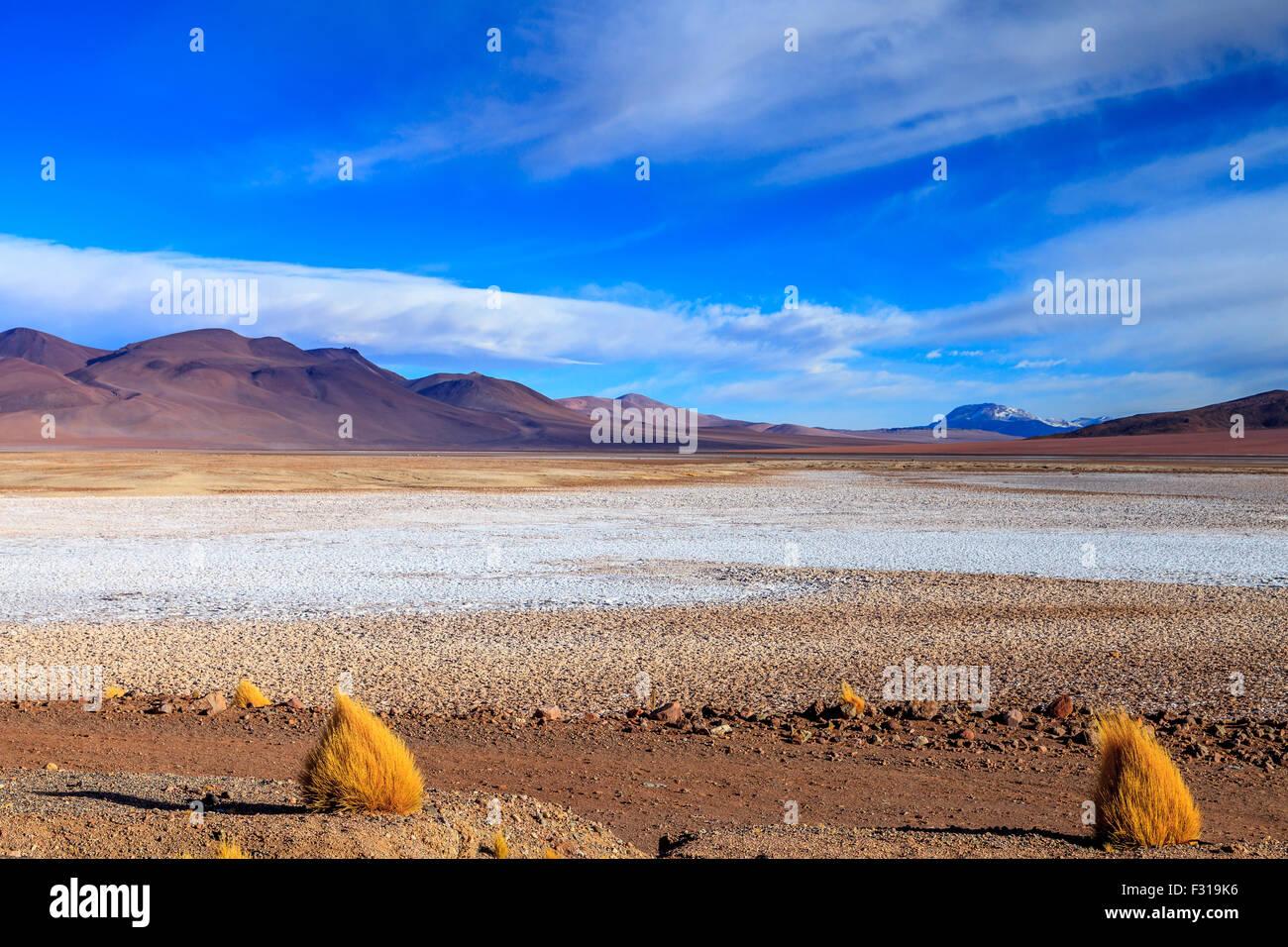 Salar de Tara with curious grass formations - Stock Image