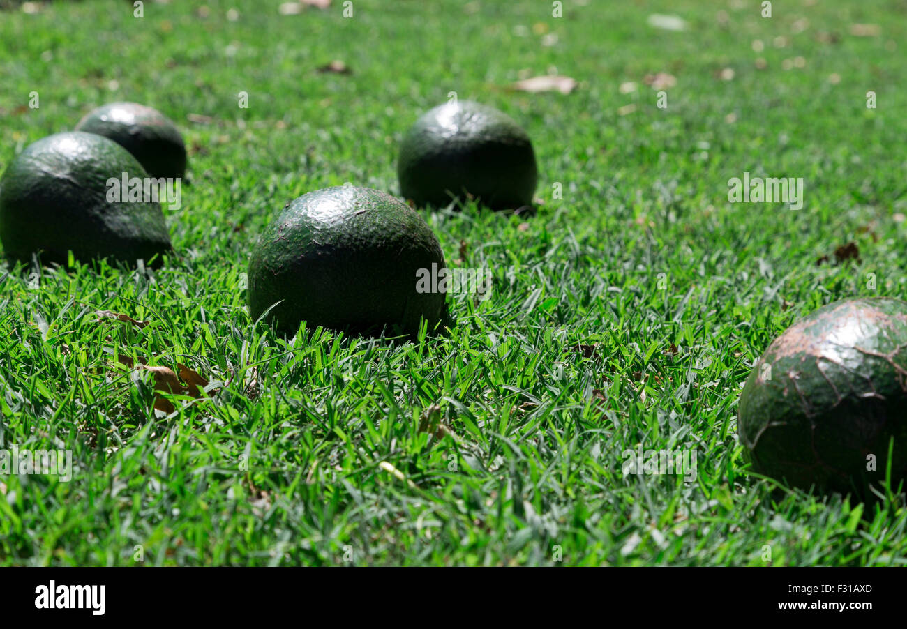 Avocados on the grass - Low depth of field - Stock Image