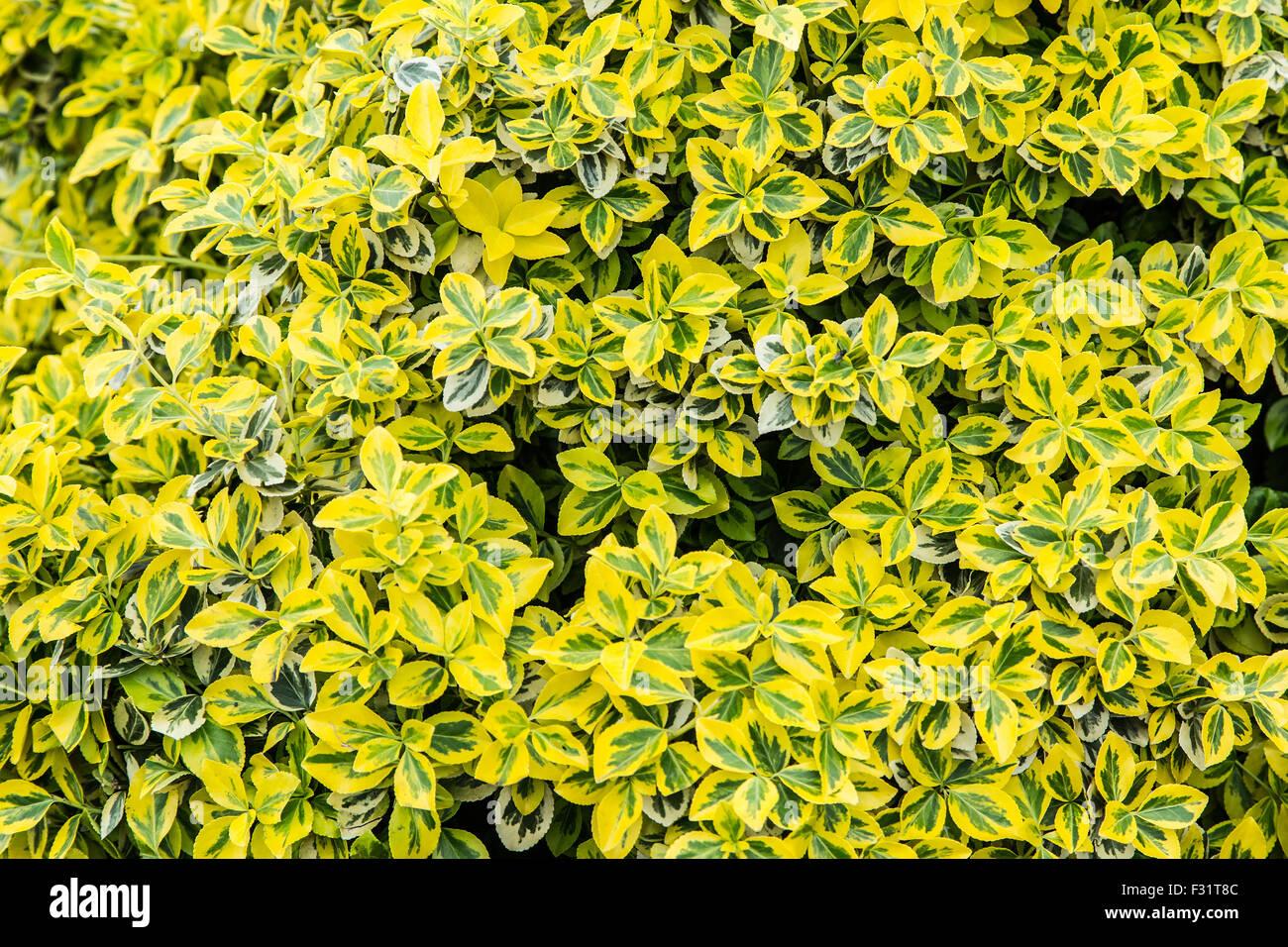 Colorful bush leaves. Close-up shot. Nature background. - Stock Image