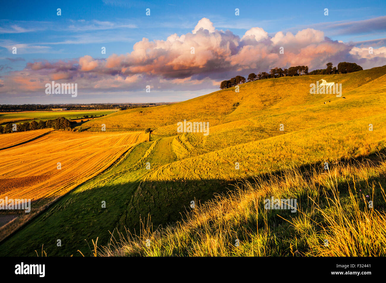 The White Horse at Cherhill in Wiltshire. Stock Photo