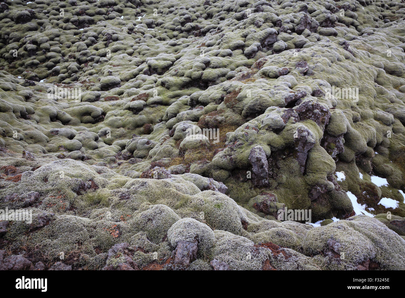 Lava field covered in green moss. South Iceland. - Stock Image