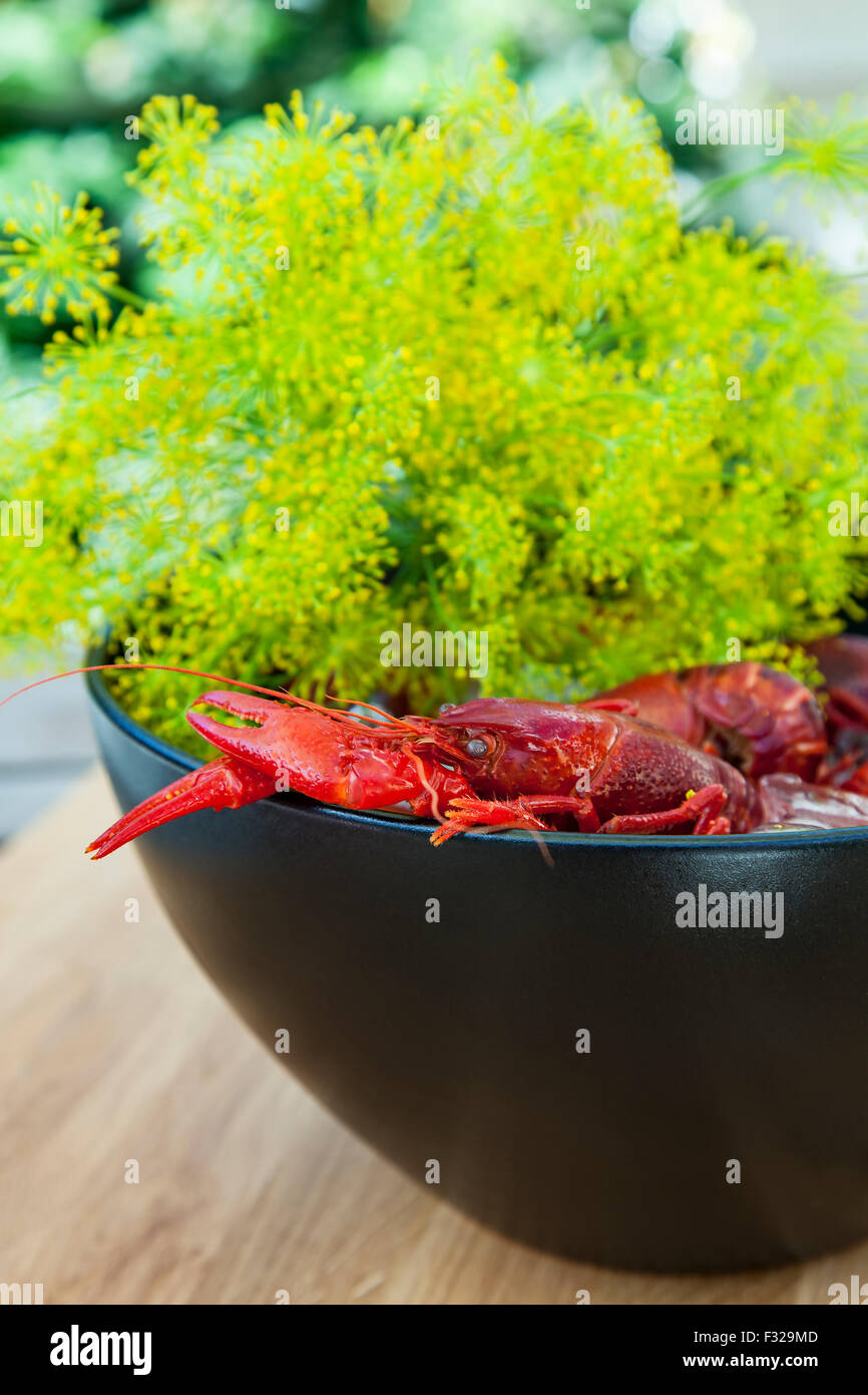 Image of a pot of fresh crayfish and dill. - Stock Image