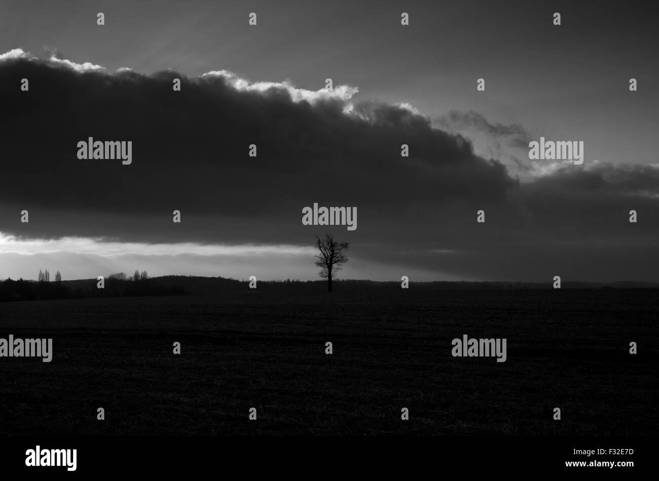 Single Oak tree in a field, black and white - Stock Image