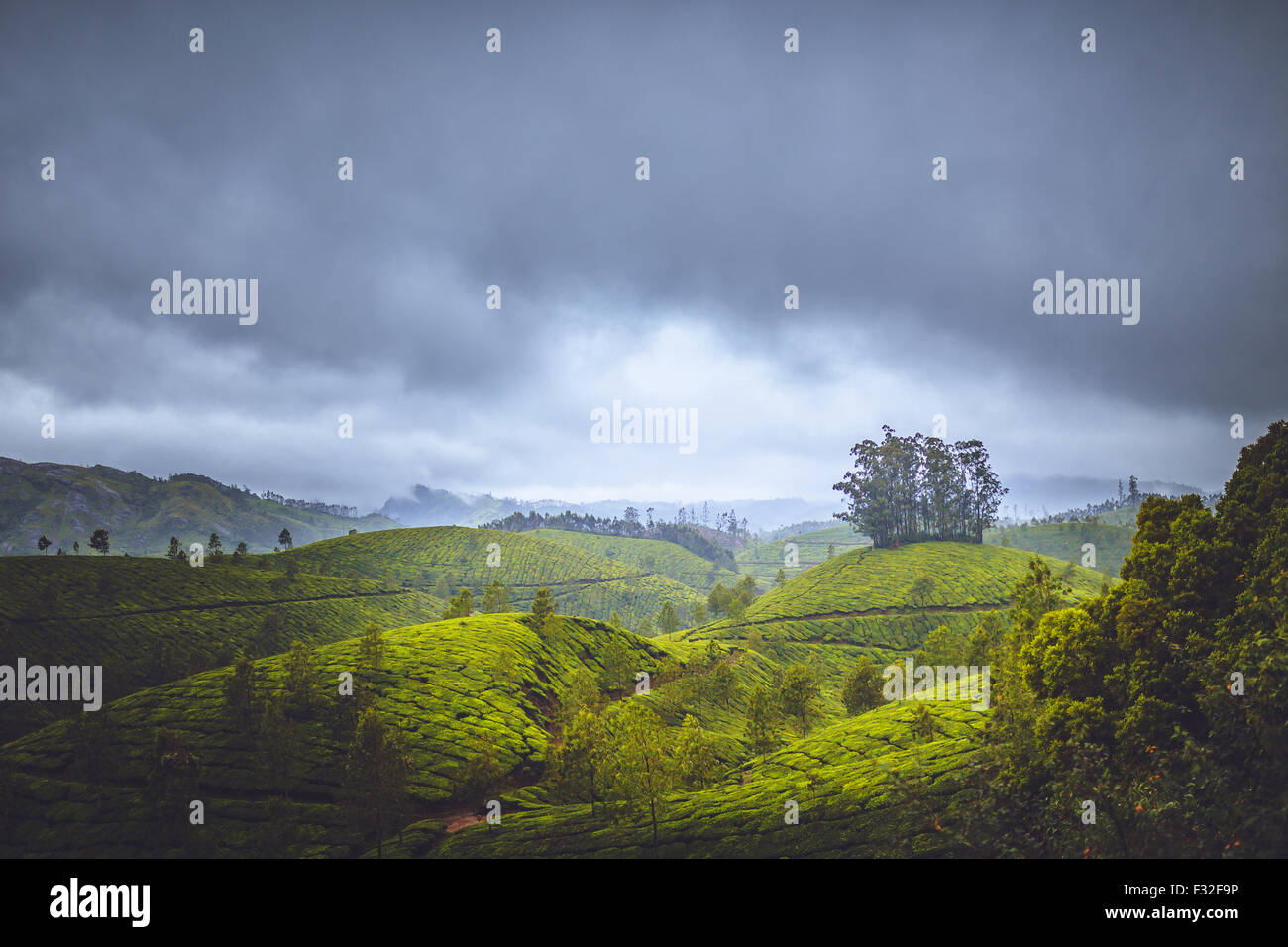 Munnar  is a town and hill station located in the Idukki district of the south western state of Kerala in India. - Stock Image