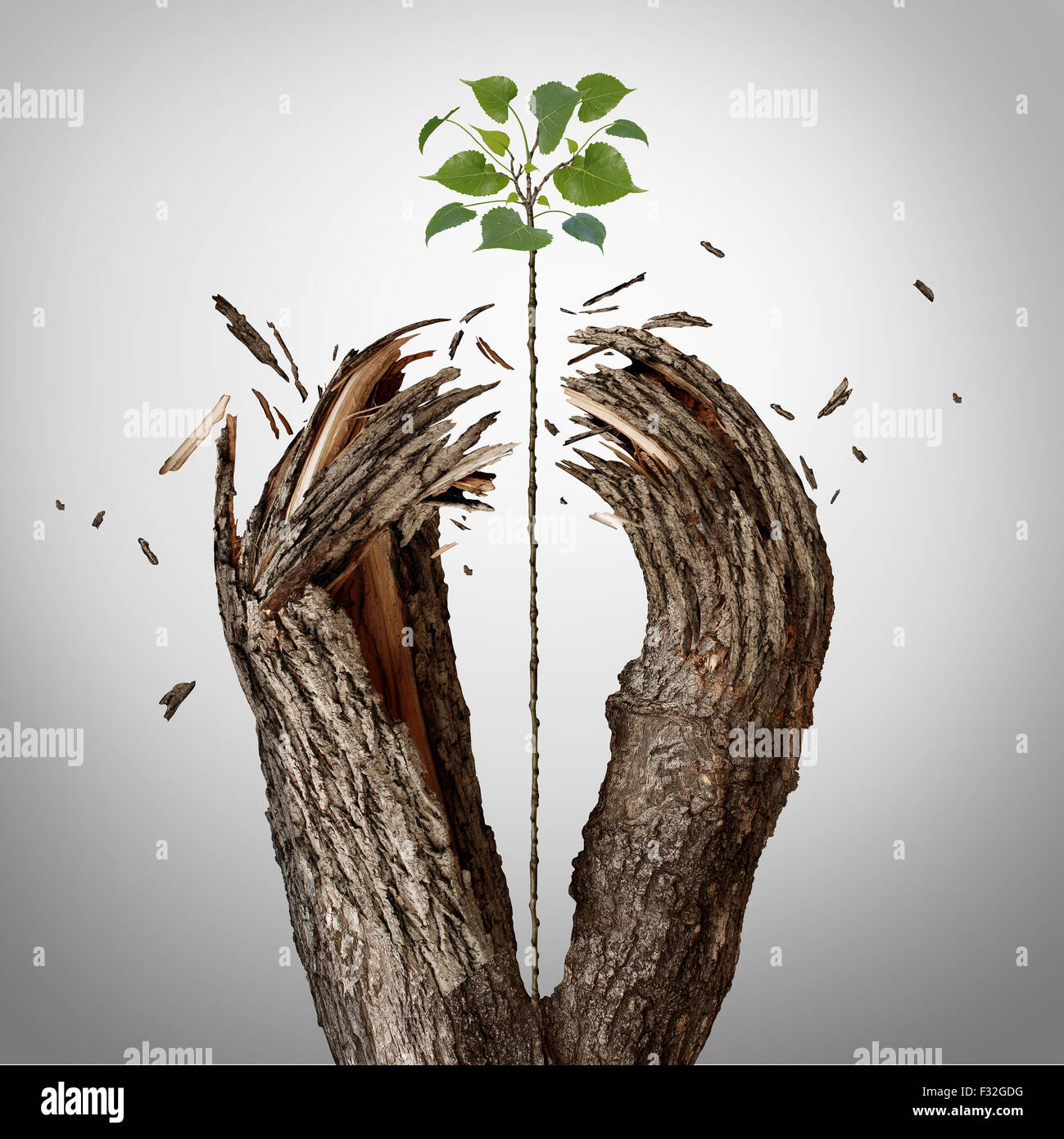 Breaking through concept as a green sapling growing upward and destroying a tree barrier as a business success metaphor - Stock Image