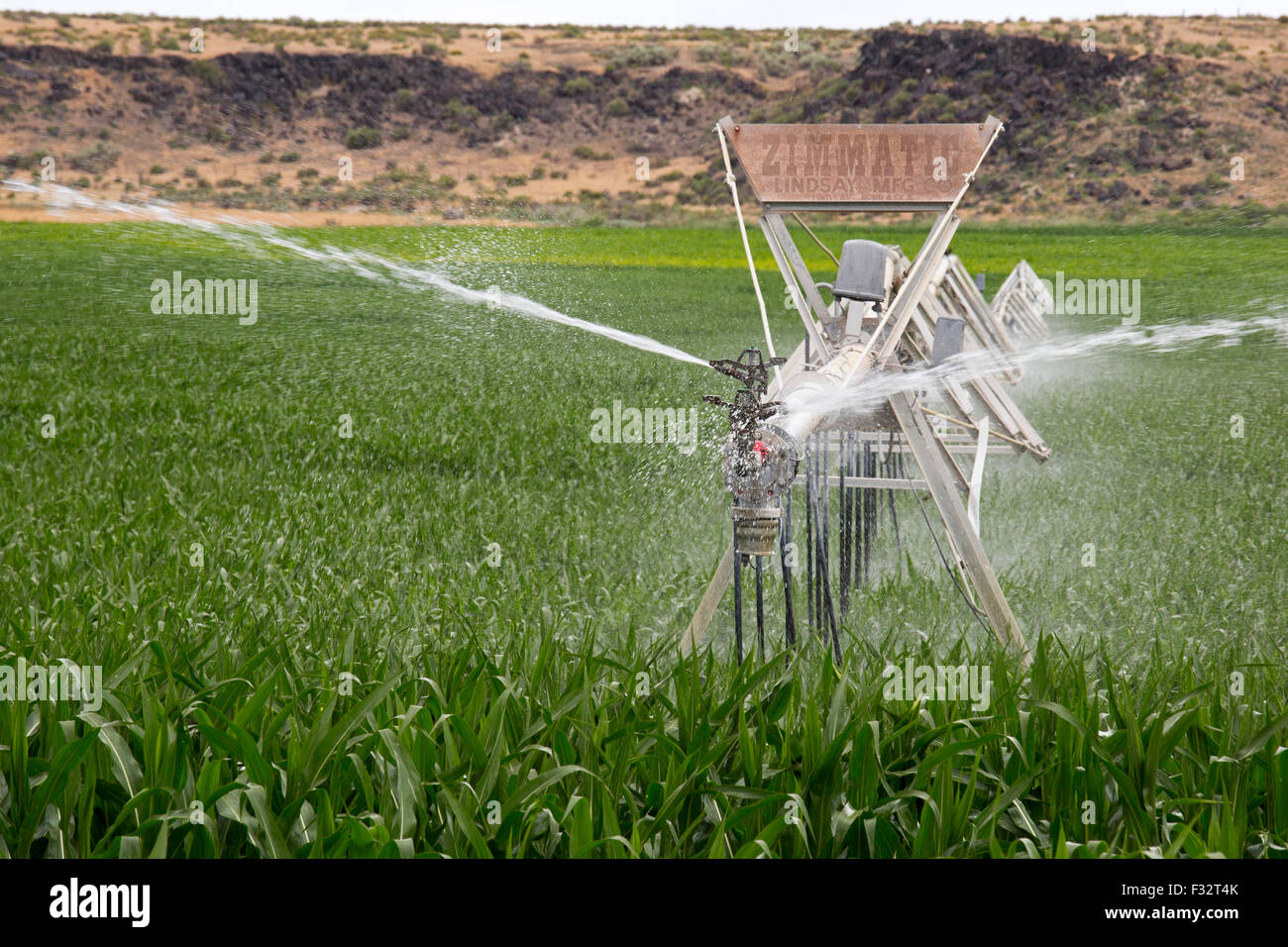 Raft River, Idaho - Irrigation of a corn crop. - Stock Image