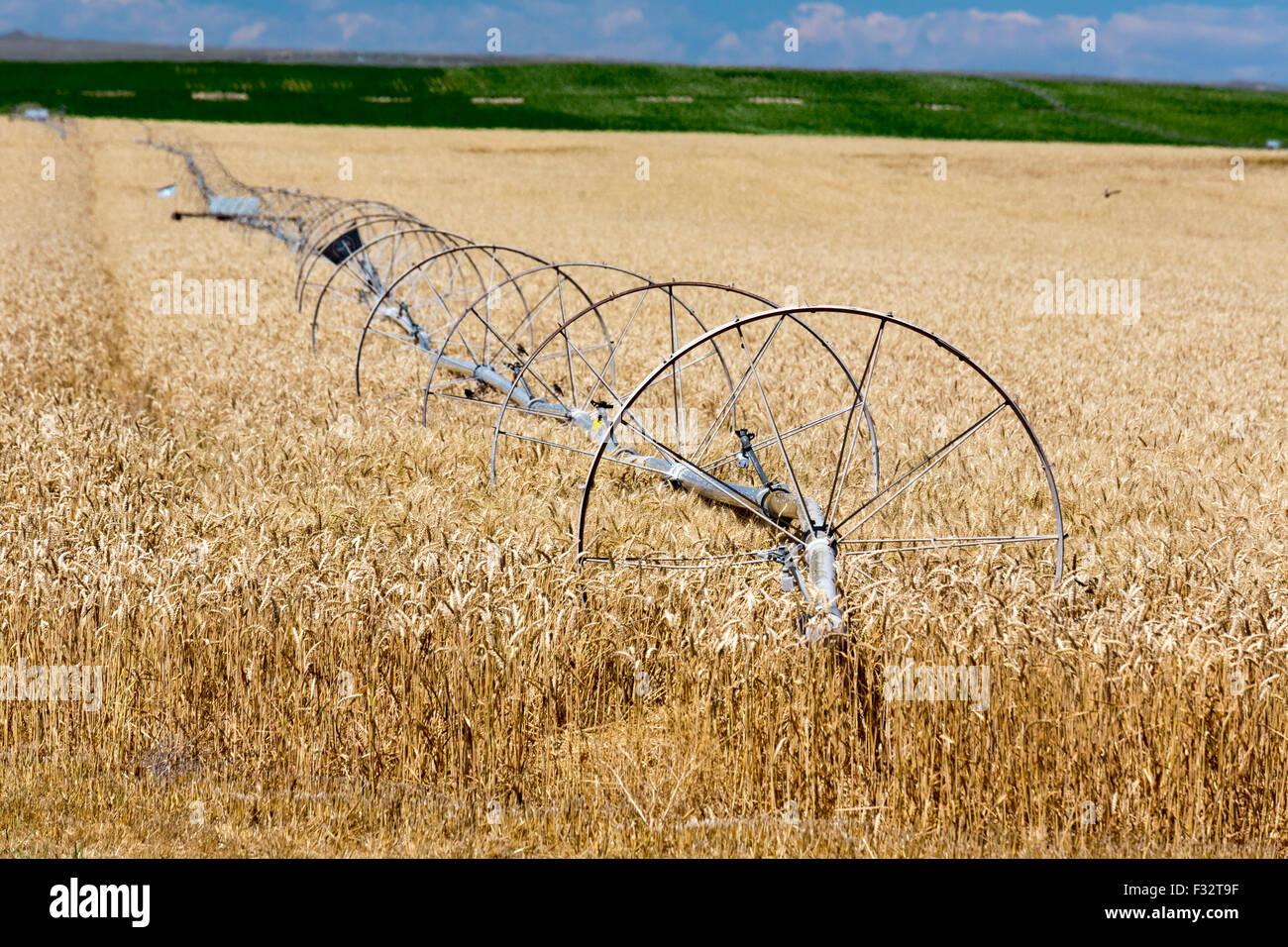 Moreland, Idaho - Irrigation equipment in an Idaho wheat field. - Stock Image