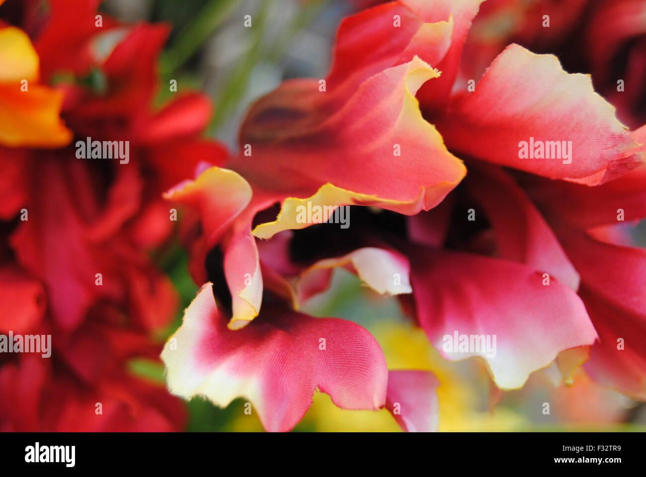 Multi-coloured flower. - Stock Image