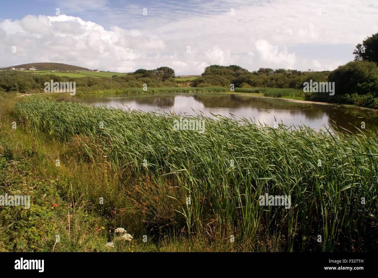 Farm pond near Sennen, Cornwall - Stock Image