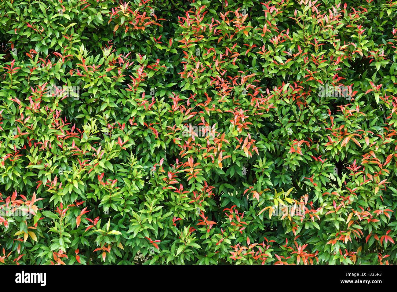 Background Wallpaper Green Leaf Natural Texture Pattern Forest Tree Outdoors Garden Greenleaf
